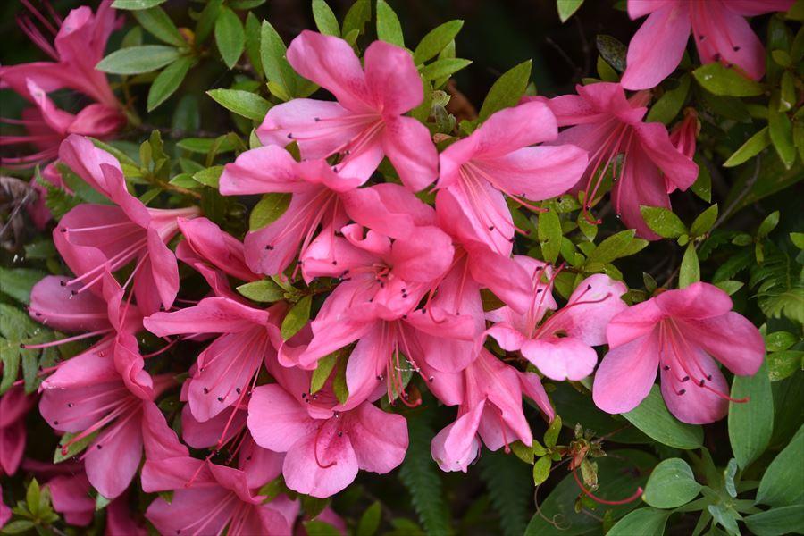 田植えと花3