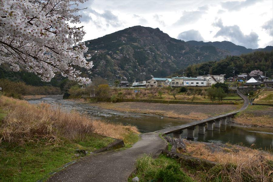 潜水橋と桜1