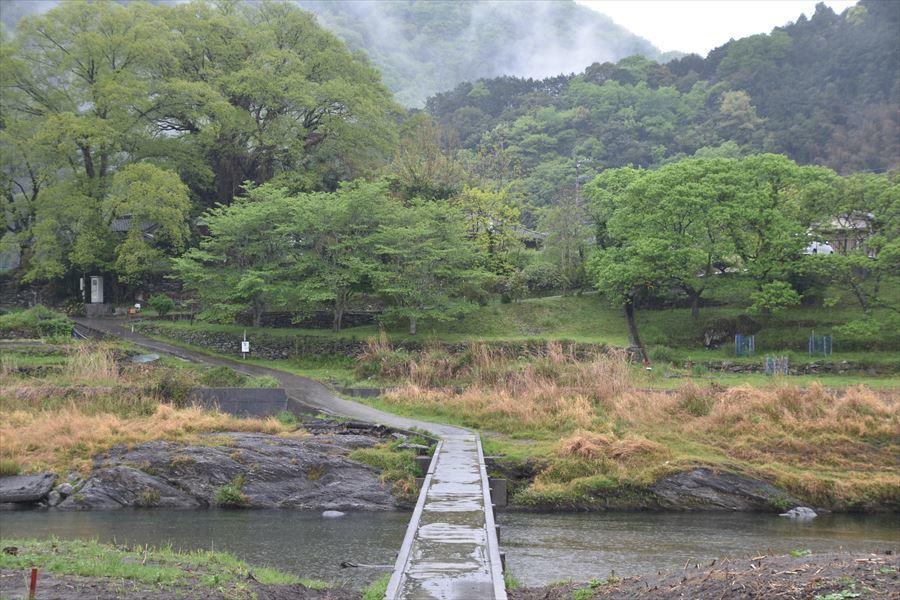 新緑と雨1