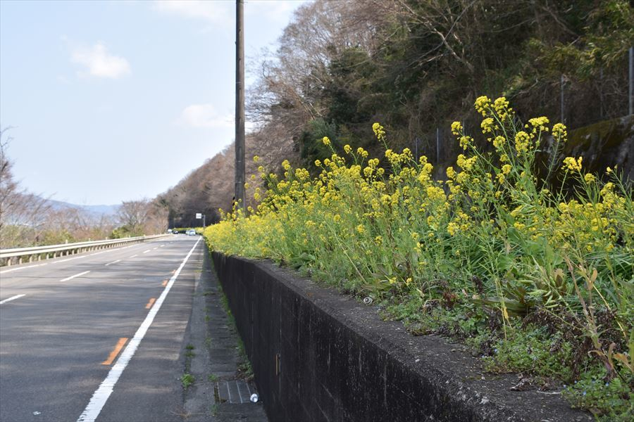 列車と菜の花2