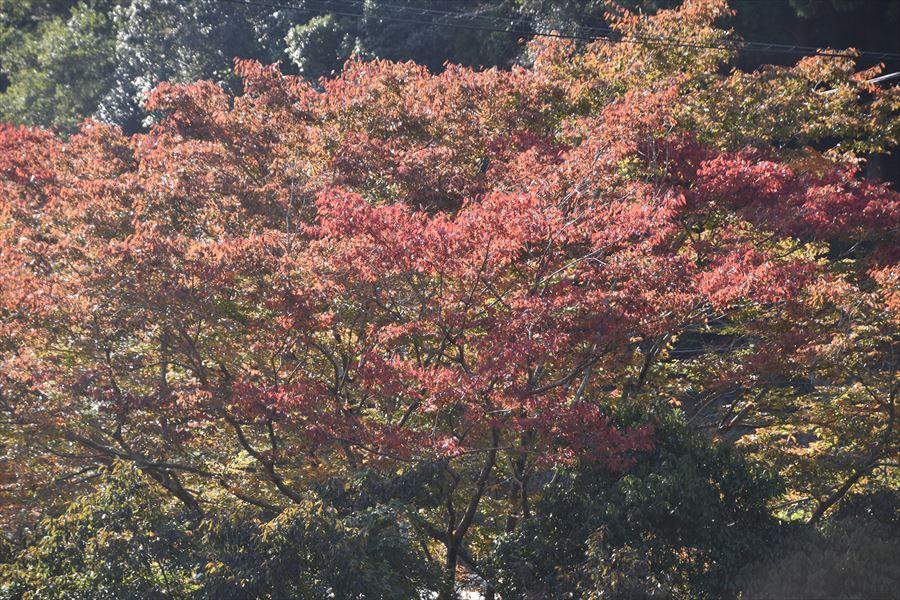 穴吹川の紅葉3