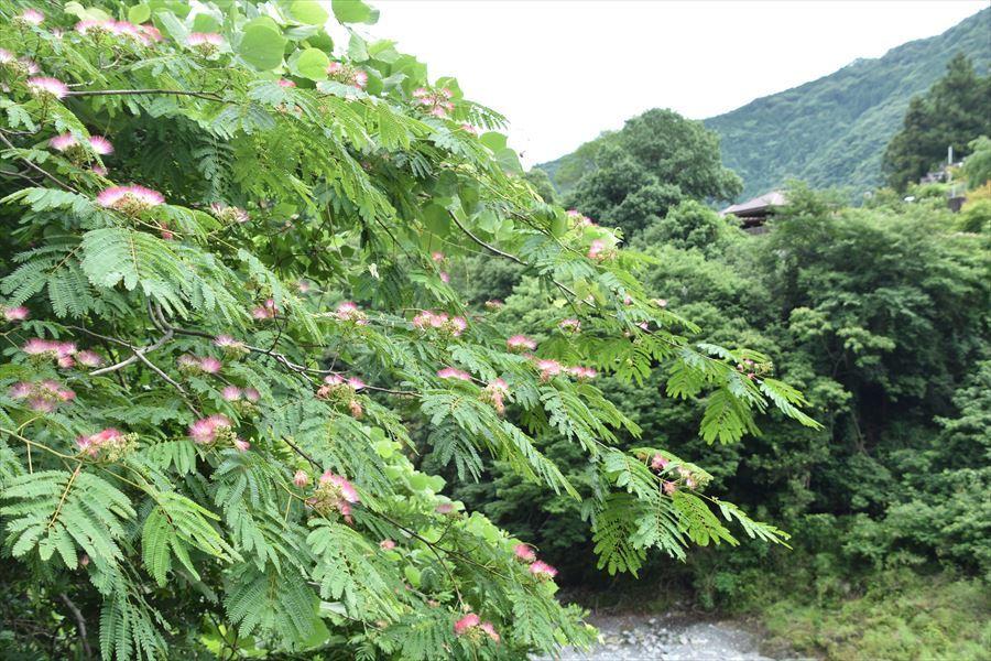 ねむの木4