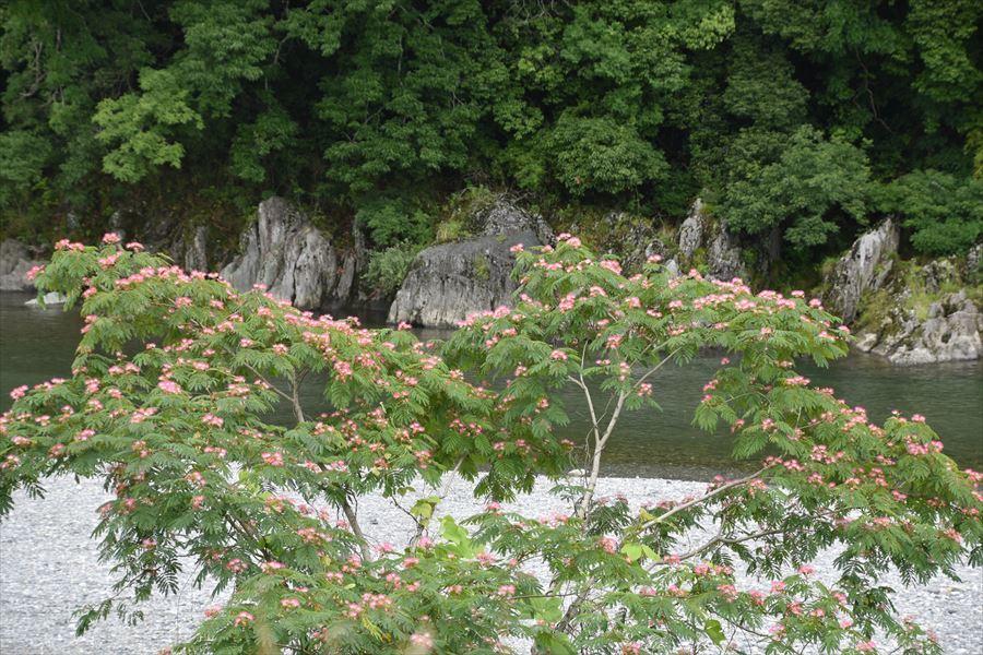 ねむの木5