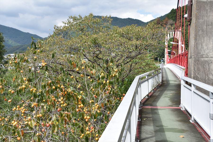 美濃田大橋4