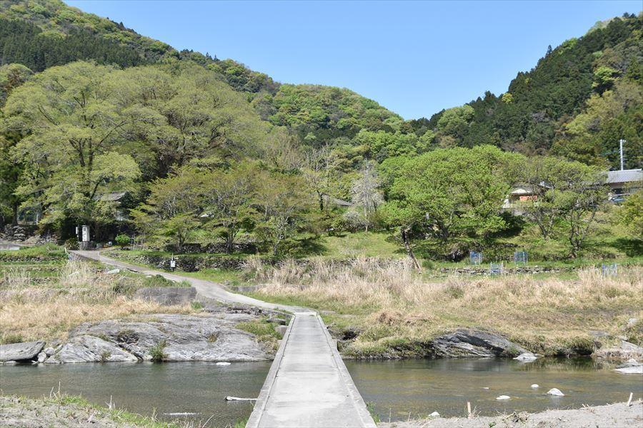 新緑と潜水橋2