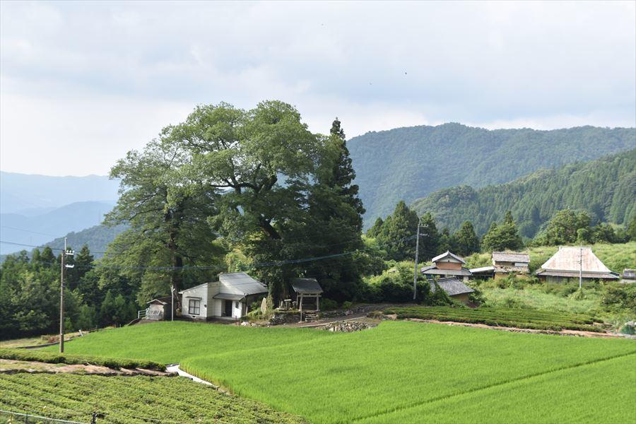 傾斜地の田2