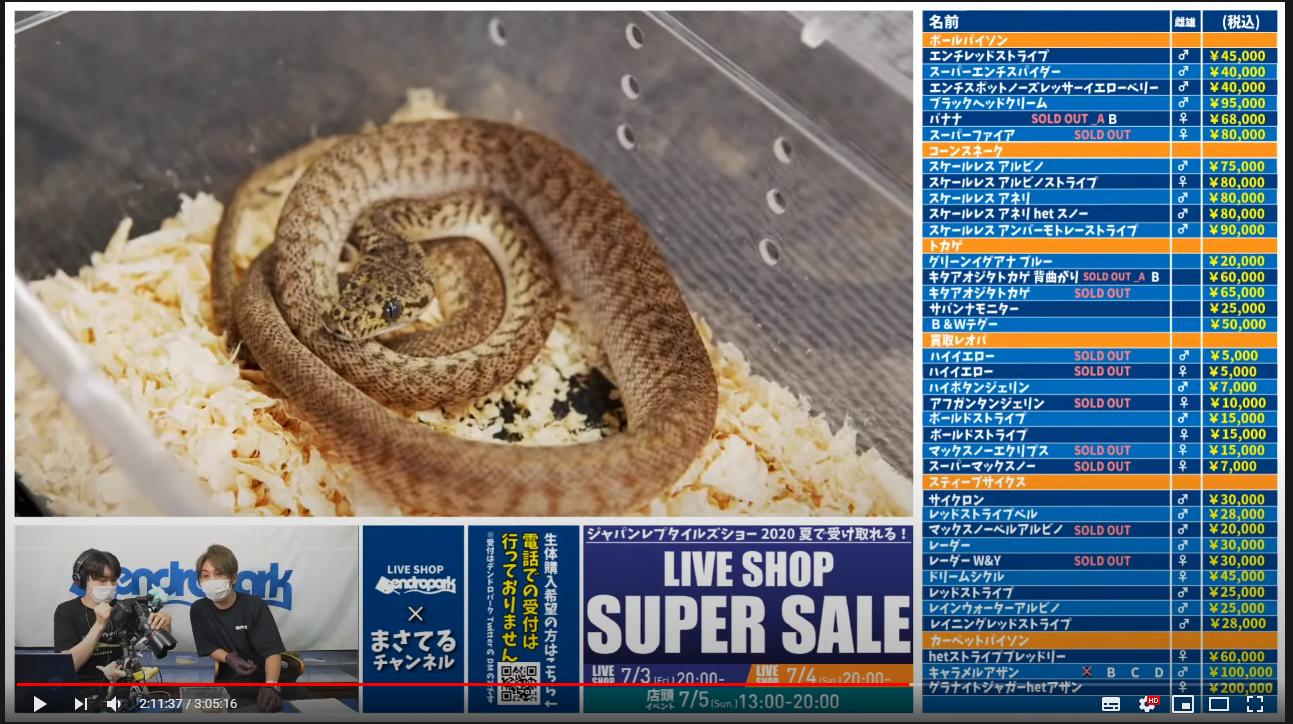 【夏のスーパーセール!!!】LIVE SHOP デンドロパーク -