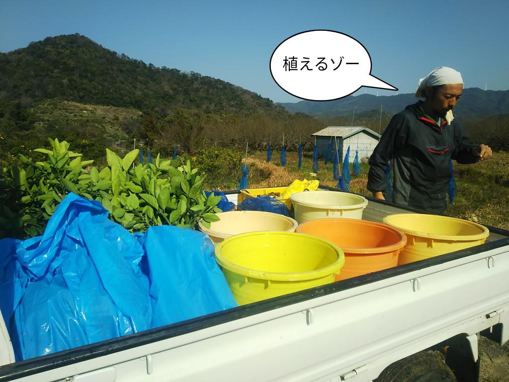 植えるゾー