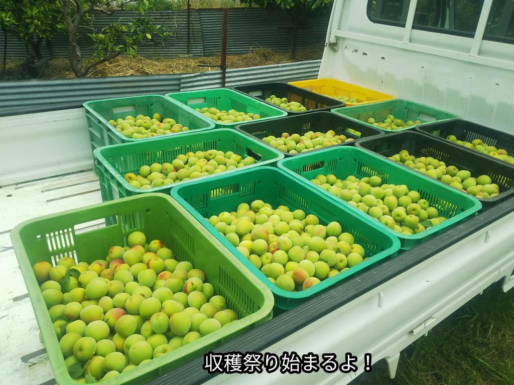 収穫祭り始まるよ!