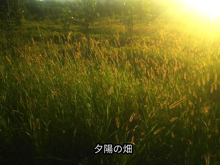 夕陽の畑!