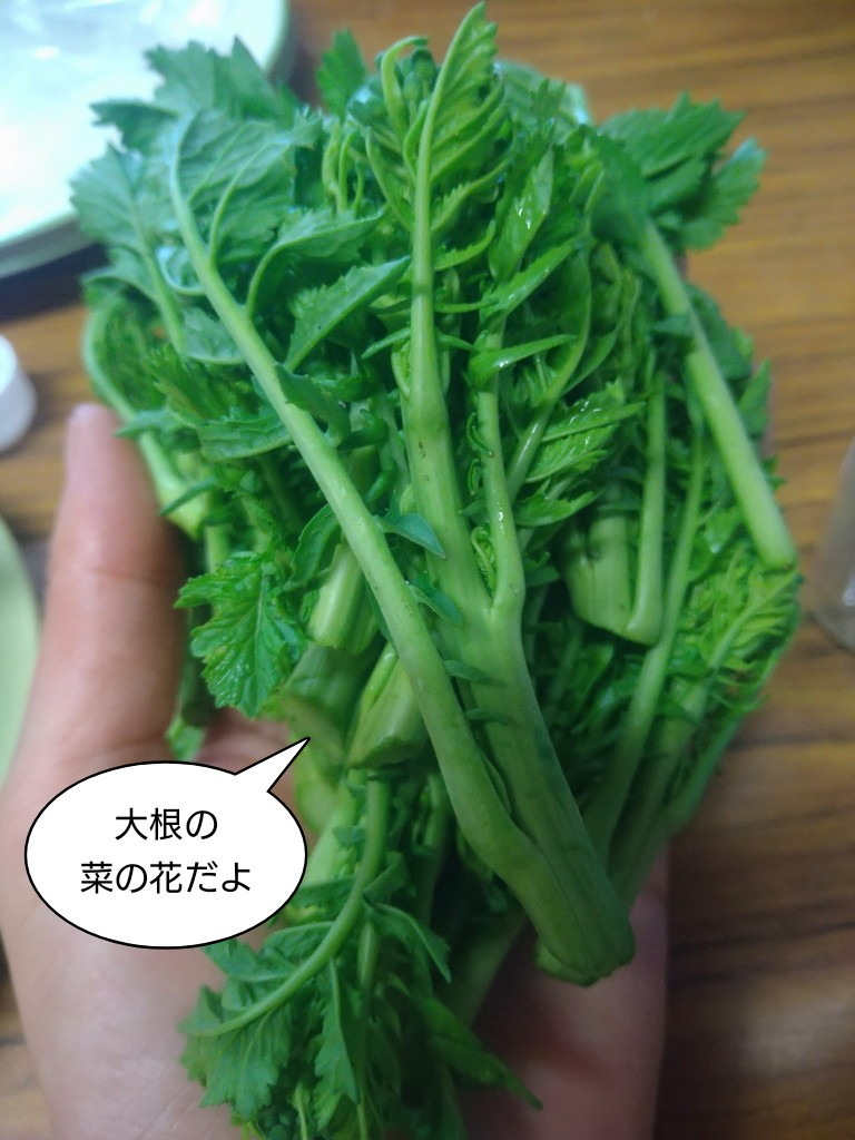 大根の菜の花