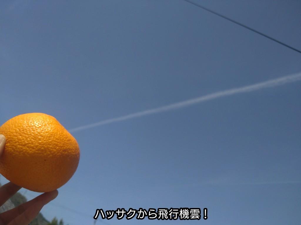 ハッサクから飛行機雲
