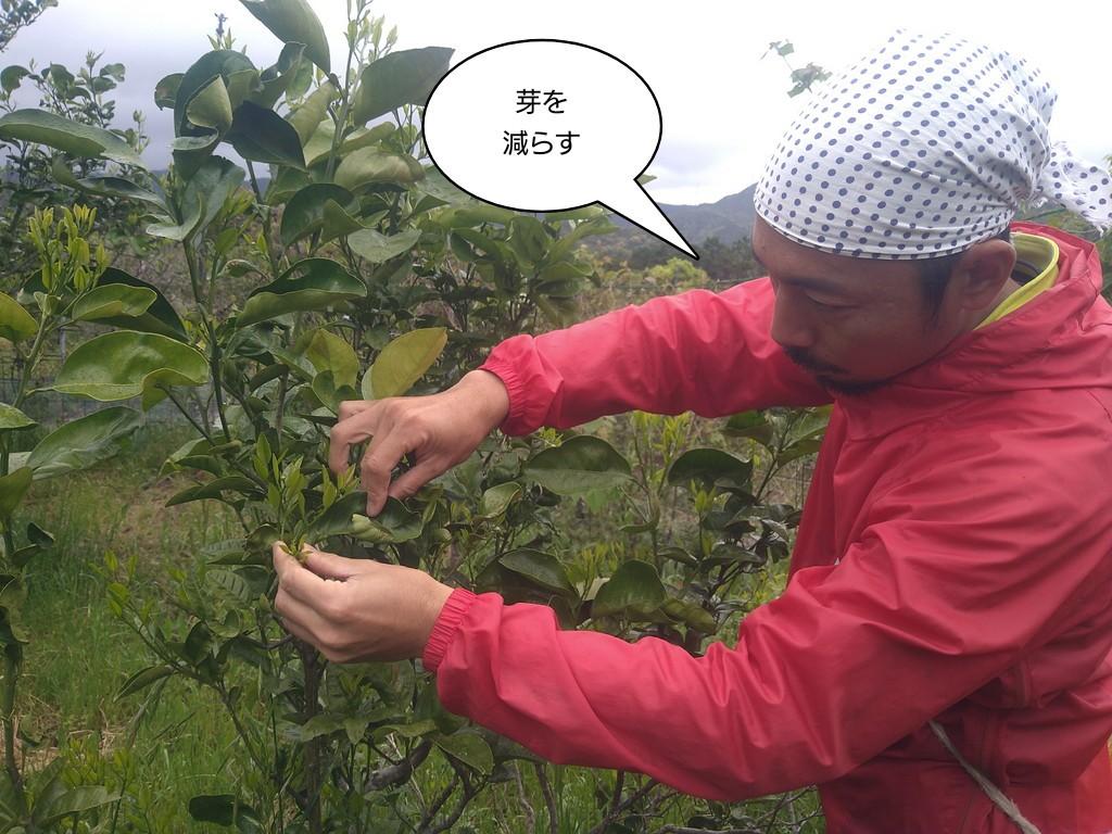 芽を減らす