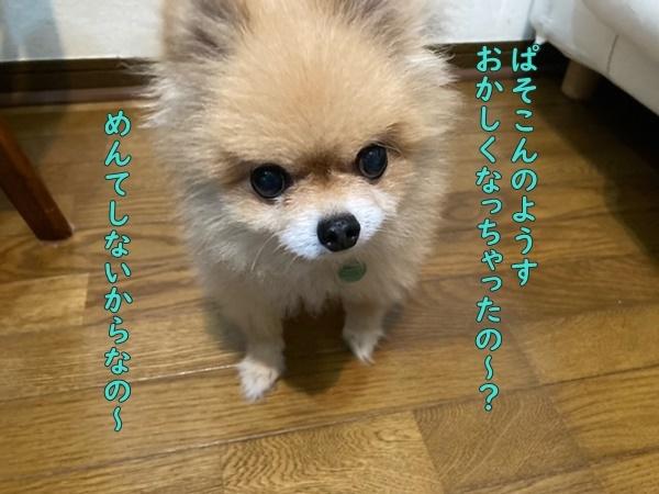 image120101401.jpeg