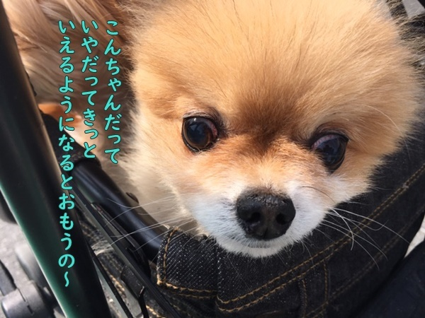 image320050301.jpeg