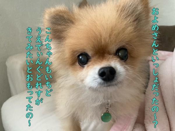 image420101801.jpeg