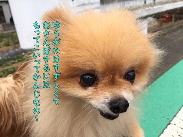 image720051001.jpeg