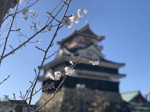 1812-桜と清洲城