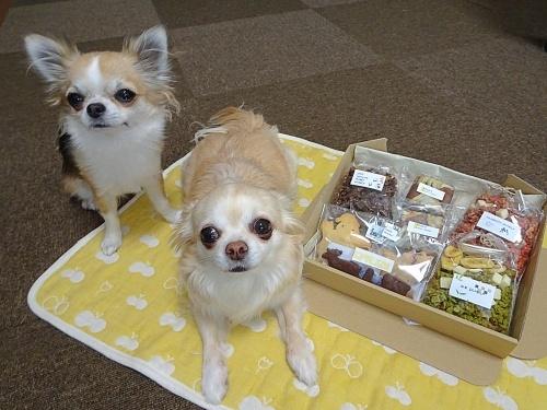 オードリーさんからプレゼント♪ 柚子 杏子