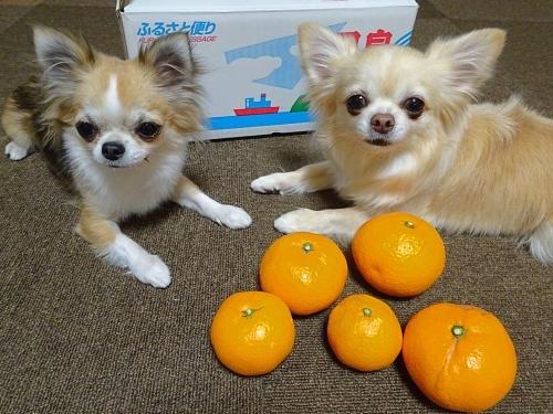 doriさんからプレゼント♪ 柚子 杏子