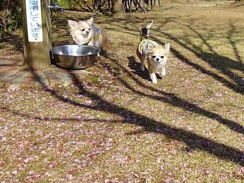 アンクロダ 柚子 杏子