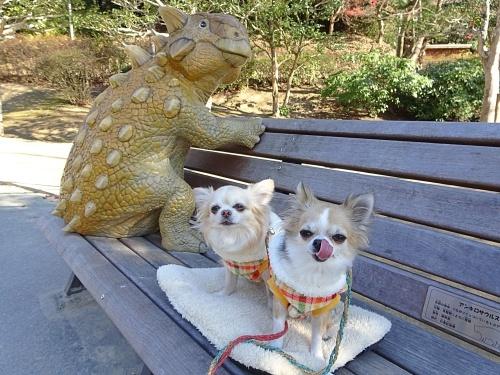 公園散歩 柚子 杏子