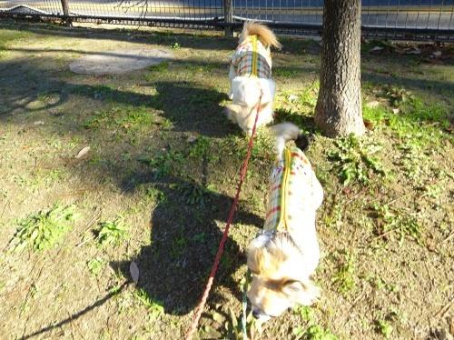 東公園 柚子 杏子