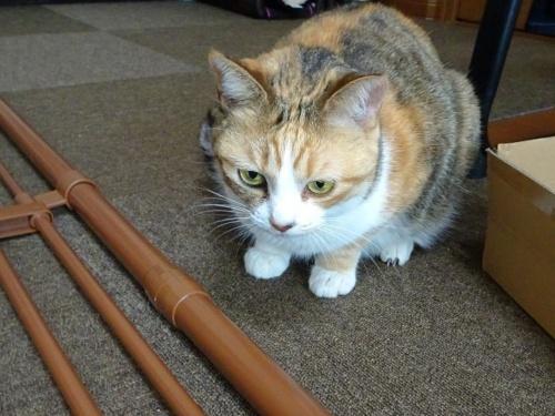 猫脱走防止フェンス し蜜柑