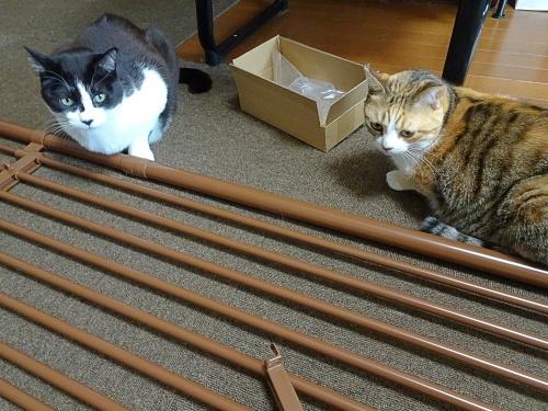 猫脱走防止フェンス しぐれ 蜜柑