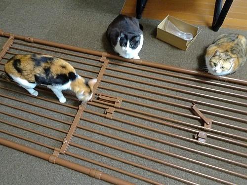 猫脱走防止フェンス しぐれ あられ 蜜柑