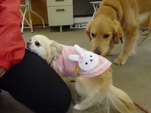 犬の学校 柚子