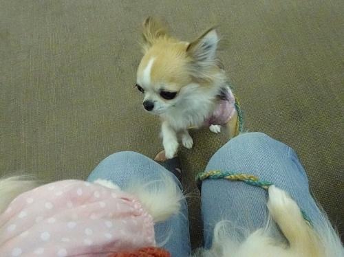 犬の学校 杏子