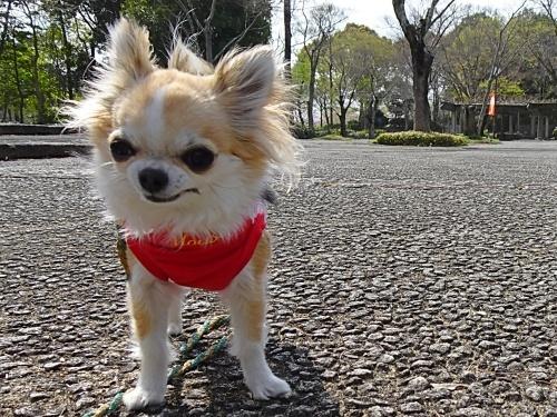 愛知県緑化センター 杏子