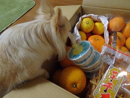 doriさんからプレゼント♪ 柚子