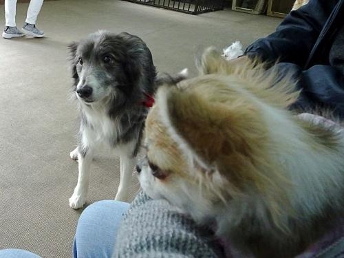 犬の学校 仁丹 杏子