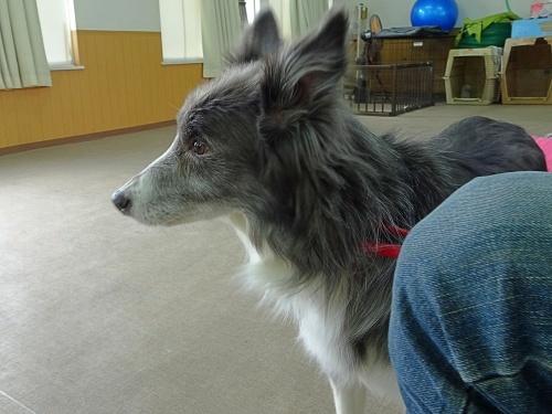 犬の学校 仁丹