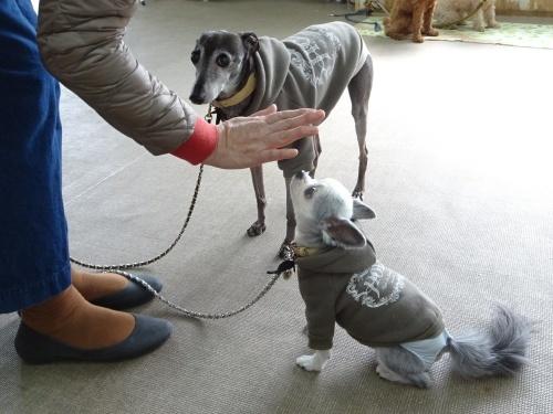 犬の学校 福助くん ぴぃ助くん