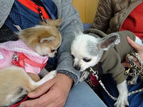 犬の学校 ぴぃ助くん 杏子