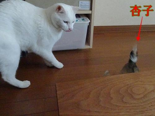 みぞれ&杏子