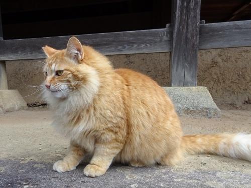 地域猫 さくら猫