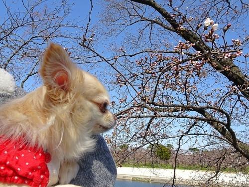 岡崎公園 柚子