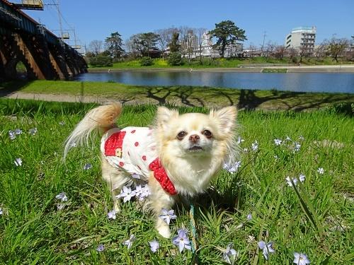 岡崎公園河川敷 柚子