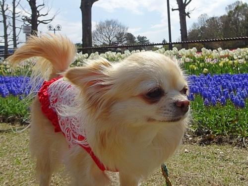 木曽三川公園センター 柚子