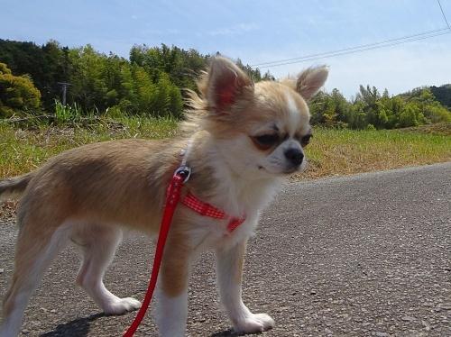 ご近所散歩 杏子