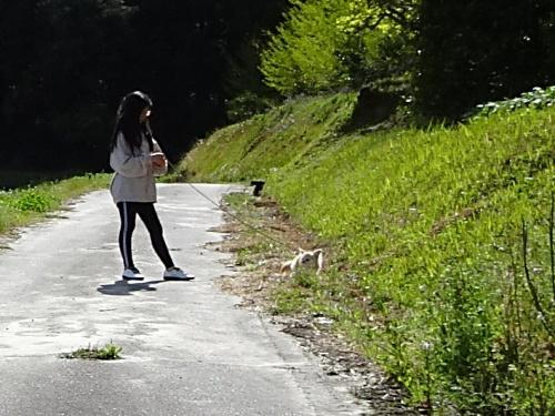 ご近所散歩 柚子