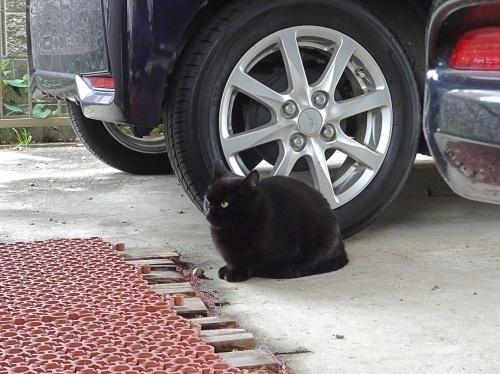 外猫 誰?