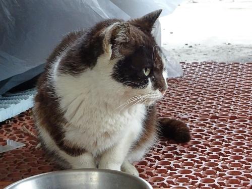外猫 ネネコ