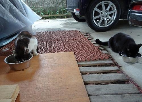 外猫 ネネコ 誰?