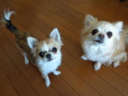 柚子&杏子
