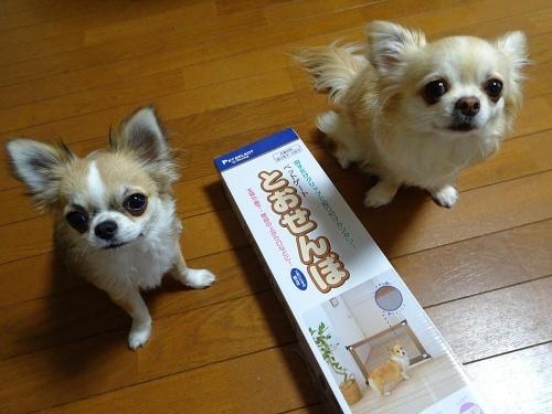 ペットゲート 柚子 杏子